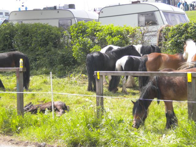 Appleby Horse Fair 2013 003
