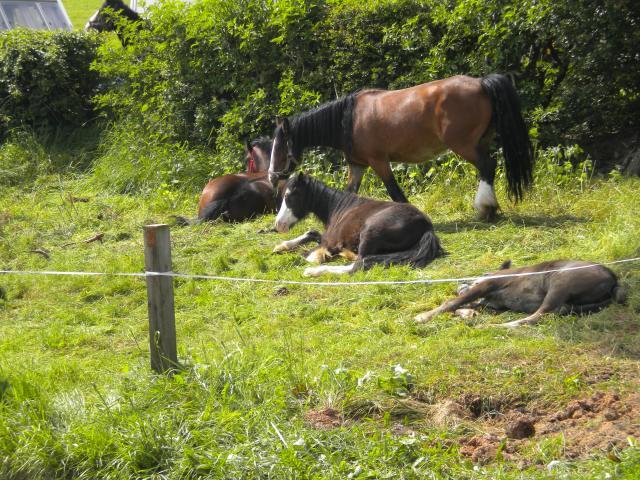 Appleby Horse Fair 2013 005