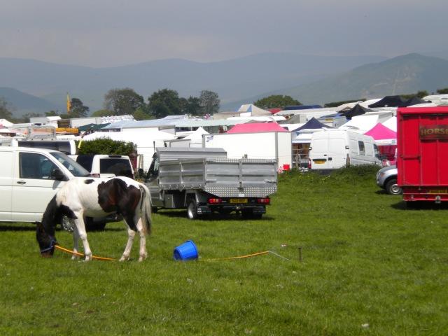 Appleby Horse Fair 2013 009