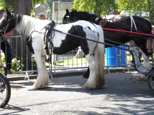 Appleby Horse Fair 2013 023
