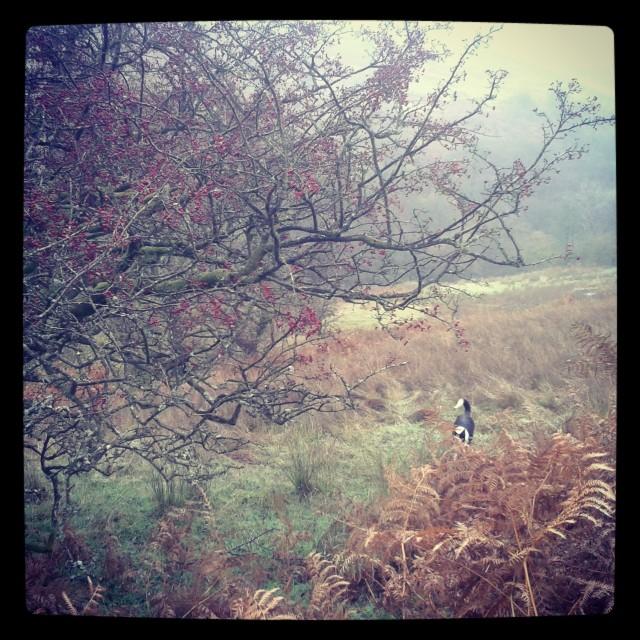 A brisk autumn morning in Cumbria